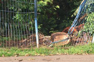 Grade depredada no Parque Tamanduá favorece degradação de mata interna (Foto: Arquivo Pessoal)