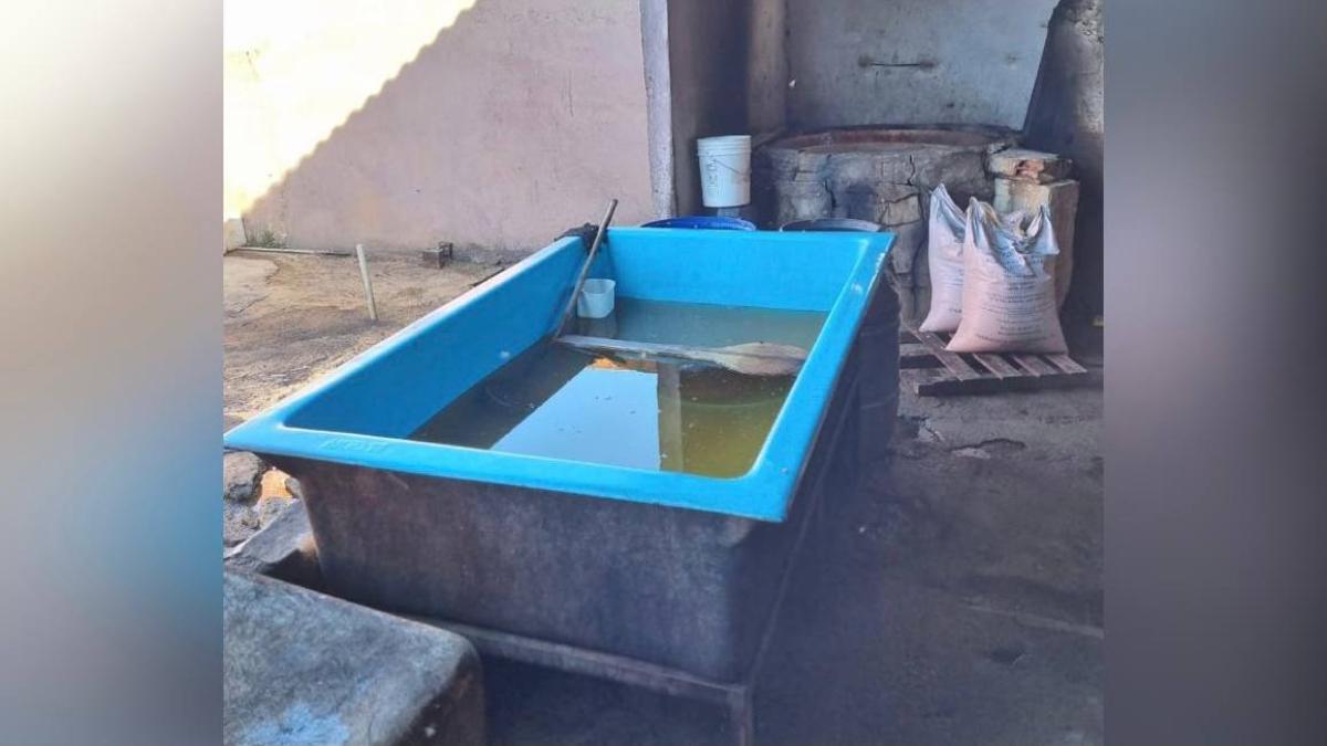 Polícia apreende 1,5 tonelada de rapadura imprópria para consumo, em Terezópolis