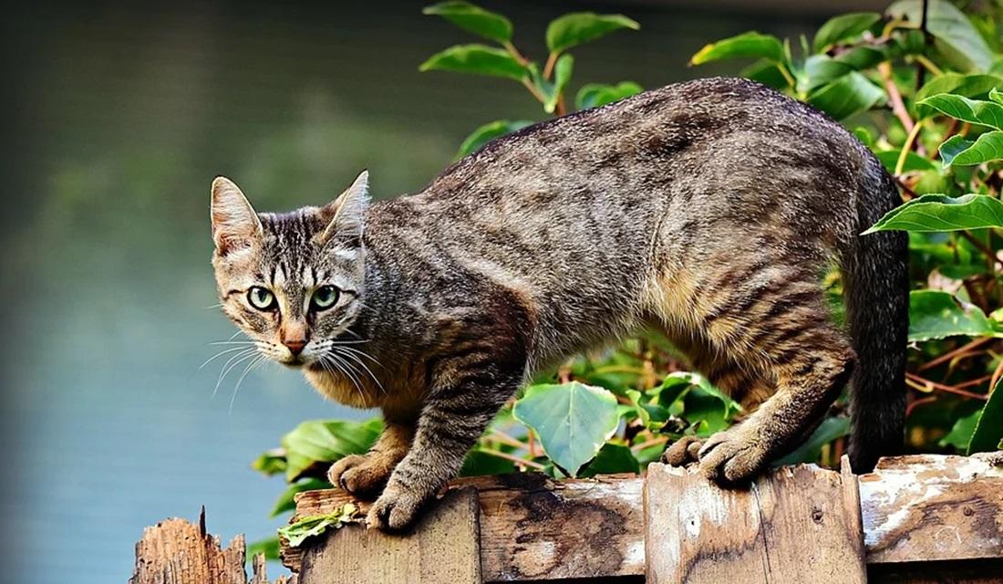 Advogada denuncia extermínio de gatos na Cidade de Goiás e cobra investigação