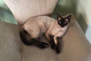 Advogada denuncia extermínio de gatos na Cidade de Goiás e cobra investigação (Foto: Reprodução/Arquivo pessoal)