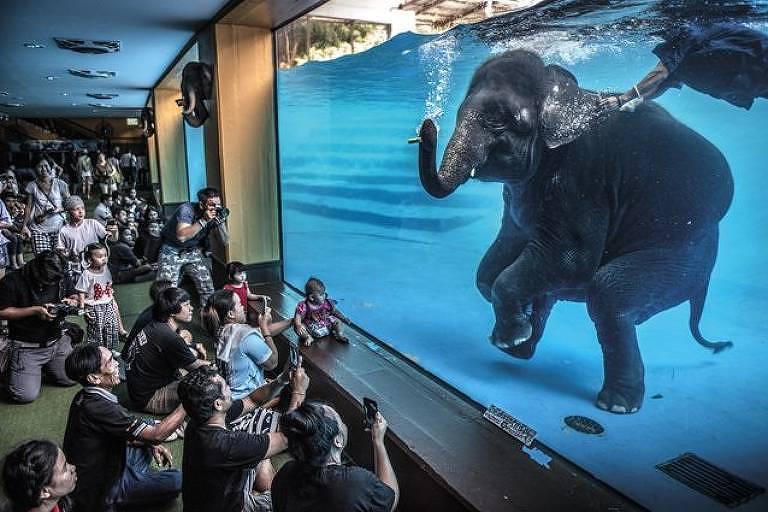 Visitantes de um zoológico na Tailândia observam elefante - Adam Oswell/WPY