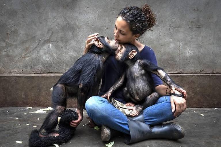 Chimpanzé recém-resgatado é apresentado a outros em centro de reabilitação que cuida de chimpanzés que ficaram órfãos - Brent Stirton/WPY